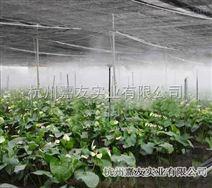 蔬菜大棚種植噴霧加濕系統