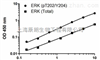猪载脂蛋白E(APOE)检测试剂盒